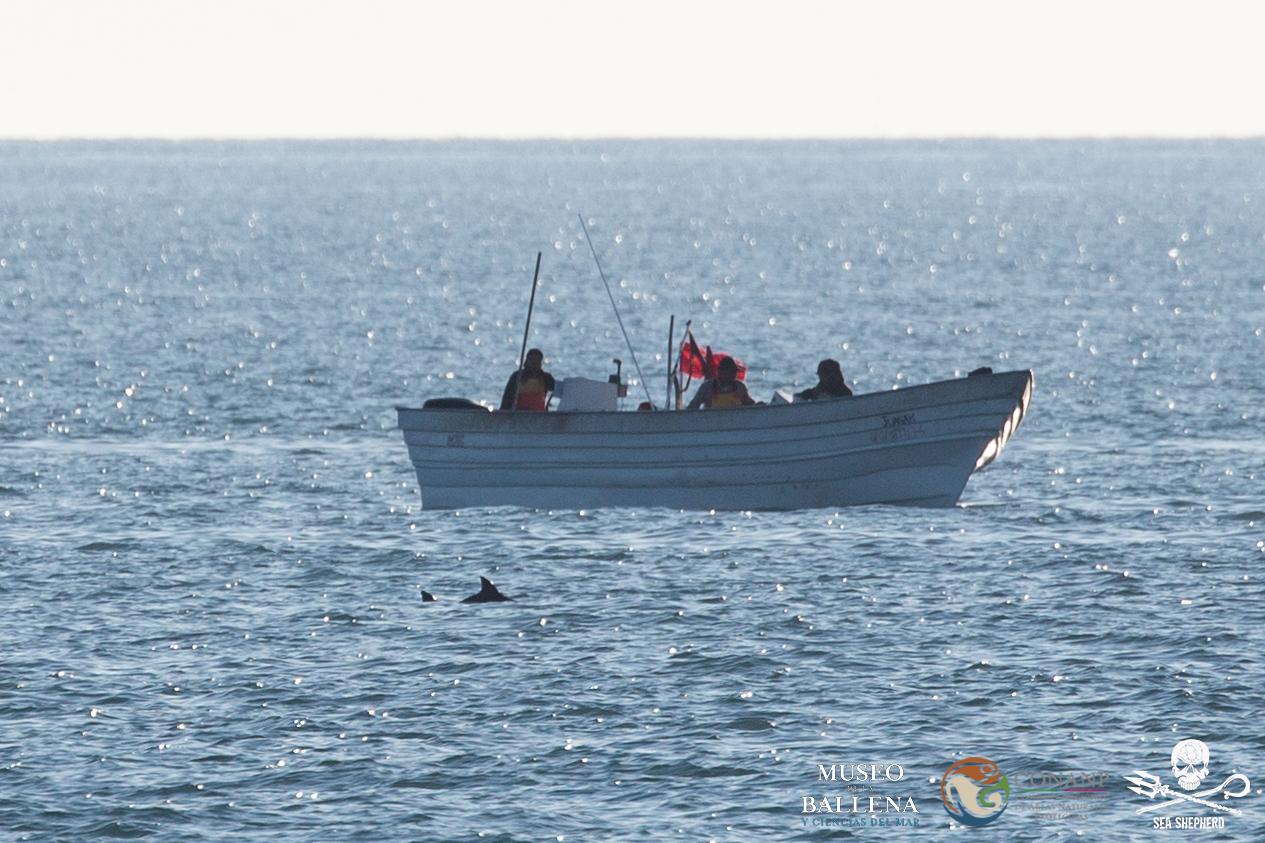 vaquita e barco de pesca