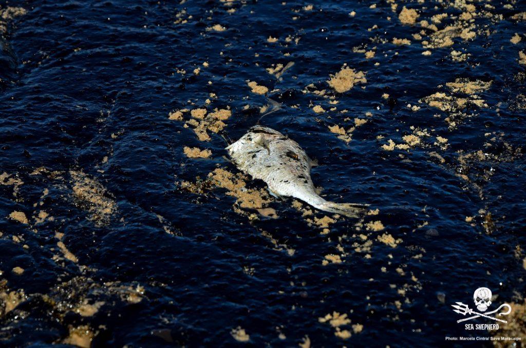 Peixe morto em petróleo