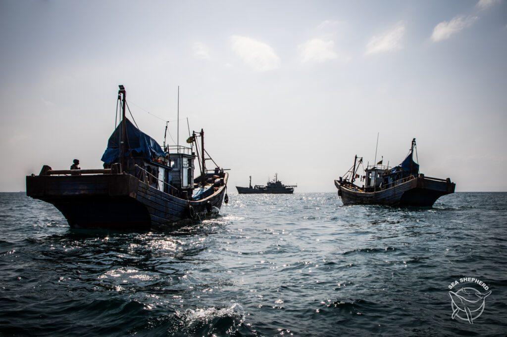Os barcos de pesca 'Tianyu 9' e 'Tianyu 10', sendo escoltados pelo 'Bob Barker' para o porto após apreensão. Foto: Tara Lambourne/Sea Shepherd.