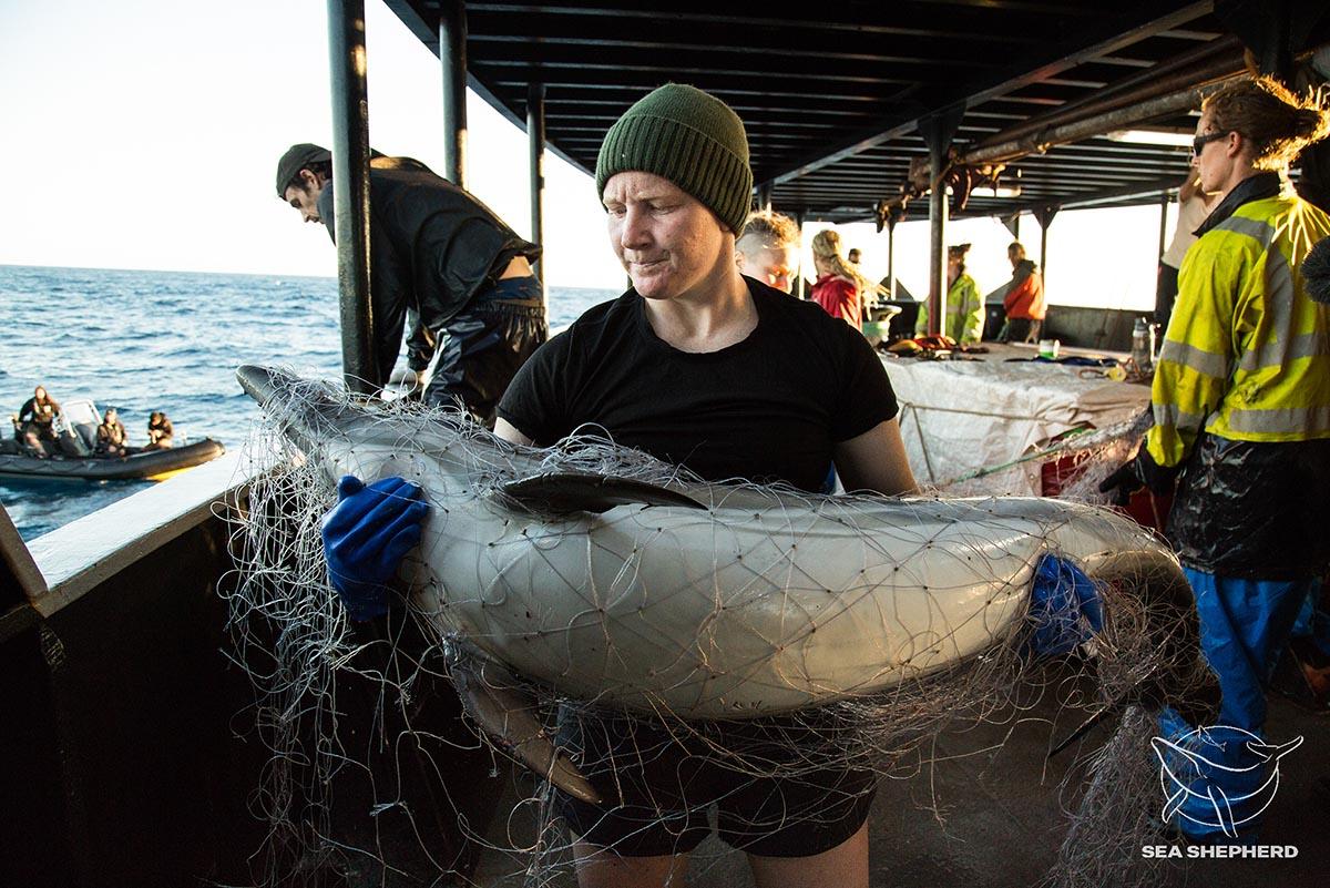 Homem segurando golfinho preso em rede de pesca