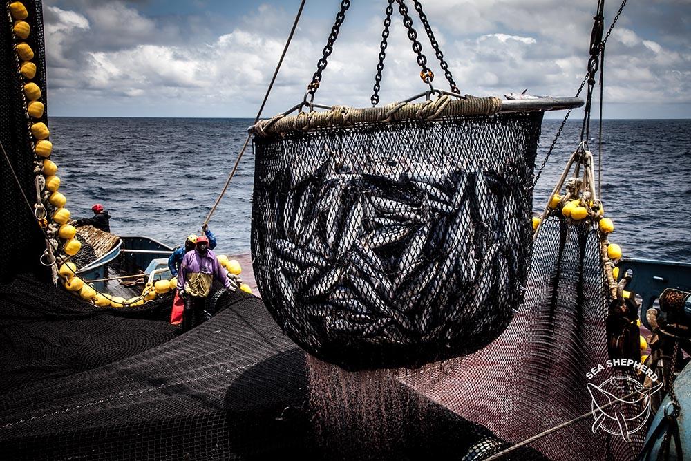 Peixes em rede pesqueira