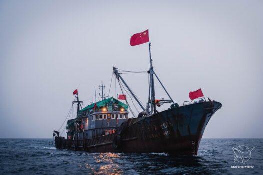 Lian Dan Yu 618 apreendido por pescar sem licença. Foto por Alice Gregoire / Sea Shepherd