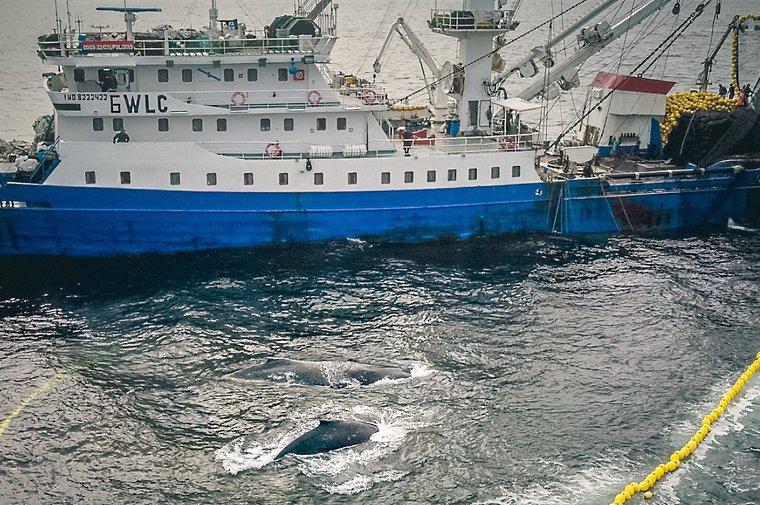 Navio de pesca de cerco
