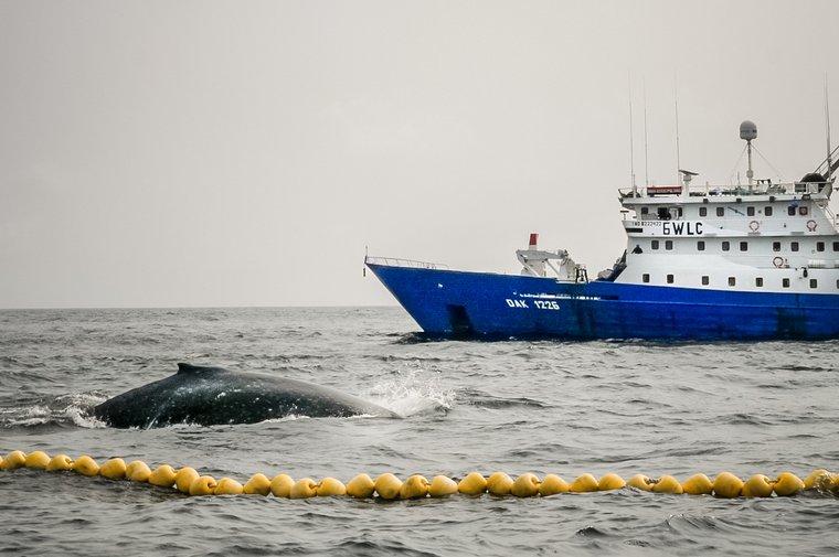 Baleia avistada em frente ao navio de pesca.